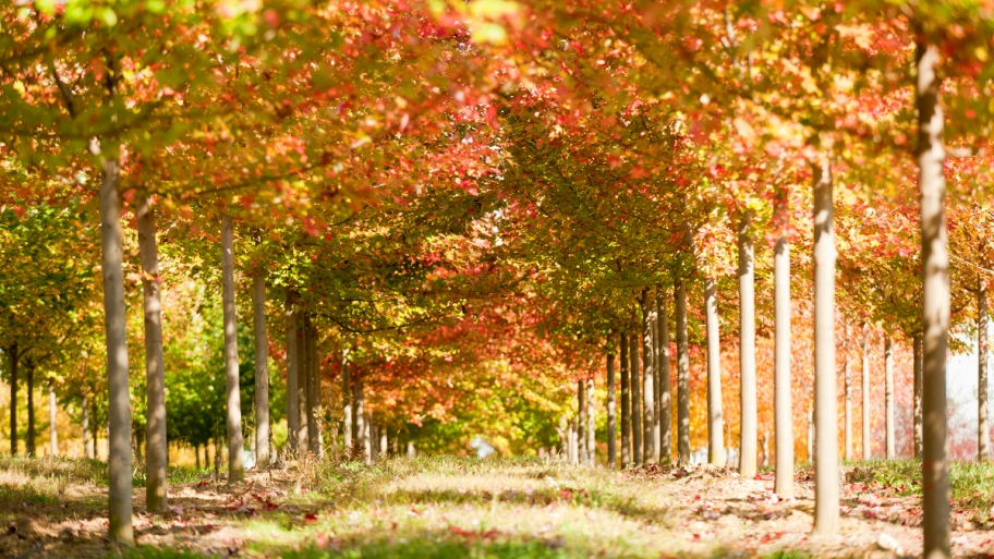 The Benefits to Planting in Fall